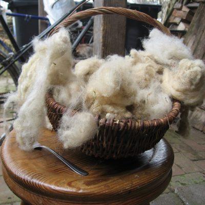 gereinigte Schafwolle
